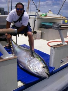 Tagged Yellowfin Tuna being released on the Royal Star