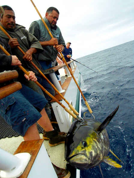 West coast angler long range fishing reports post topic for Royal polaris fishing